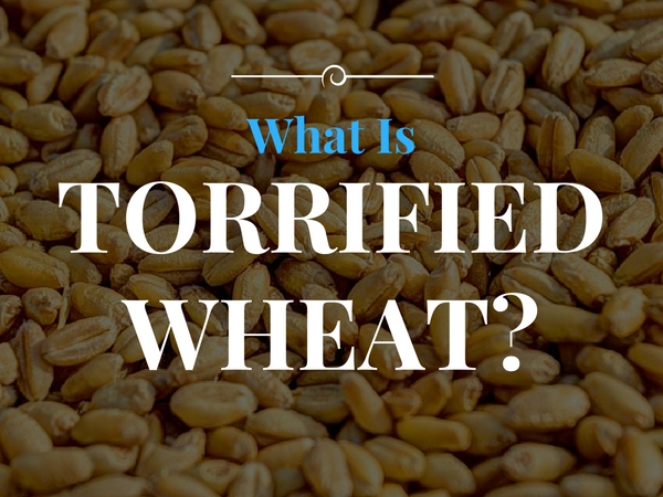 Torrified Wheat