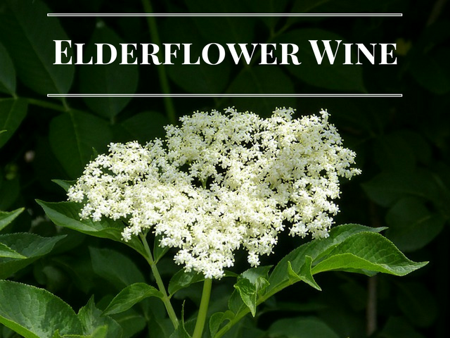 Elderflower Wine Recipe – Light To Medium Bodied