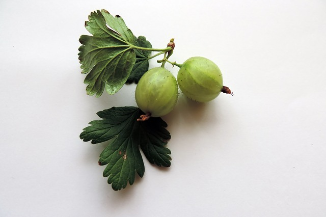 Gooseberry wine recipe