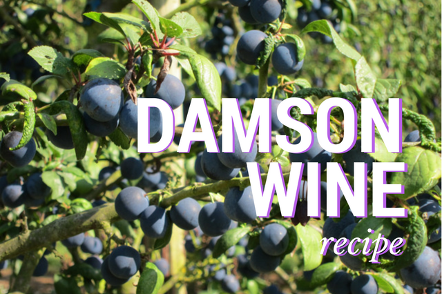 Damson Wine Recipe – Rich & Perfect For Aging