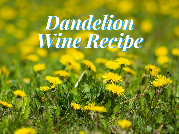 Dandelion Wine Recipe – A Taste Of Sunshine